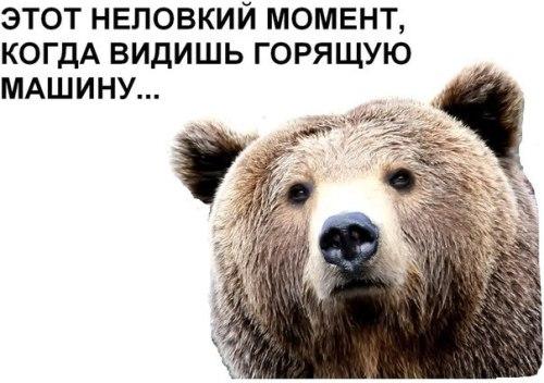 Анекдот Про Горящего Медведя