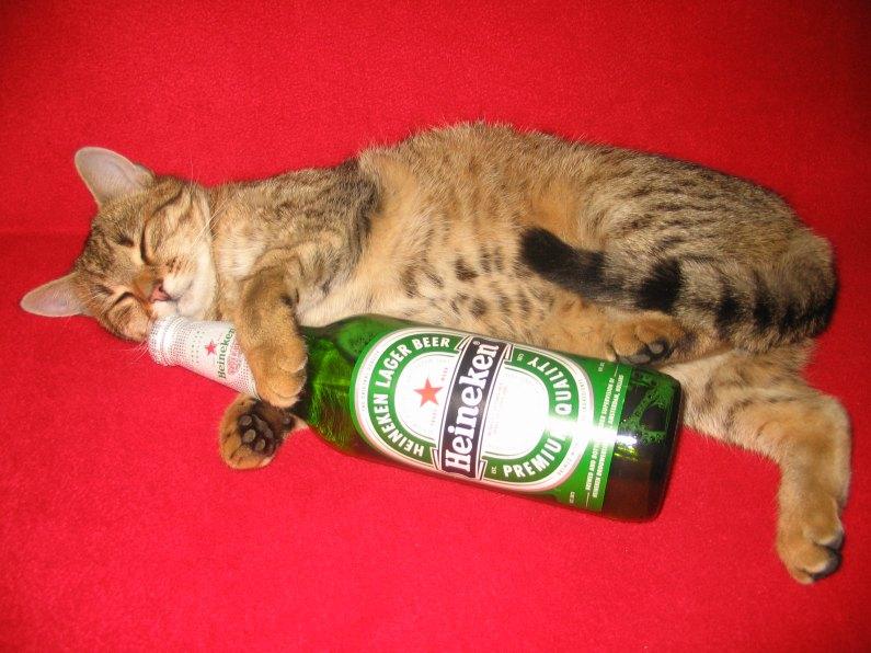 Алкоголизм зло фото