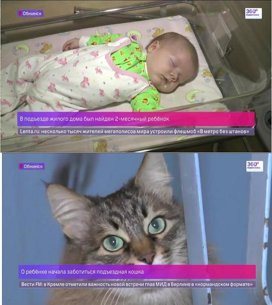 В Обнинске подъездная кошка несколько часов грела
