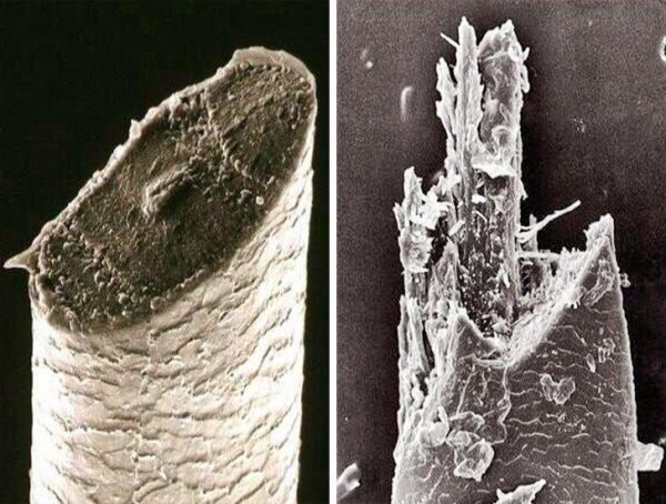 Взгляд через микроскоп: разница, которую не заметить невооруженным глазом