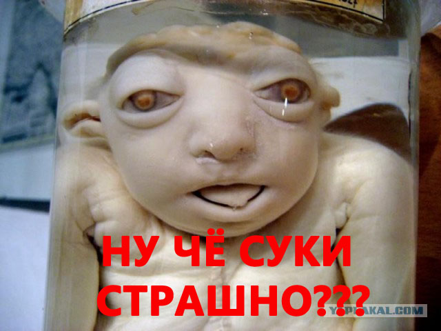 muzhchina-otlizal-samuyu-volosatuyu-vaginu