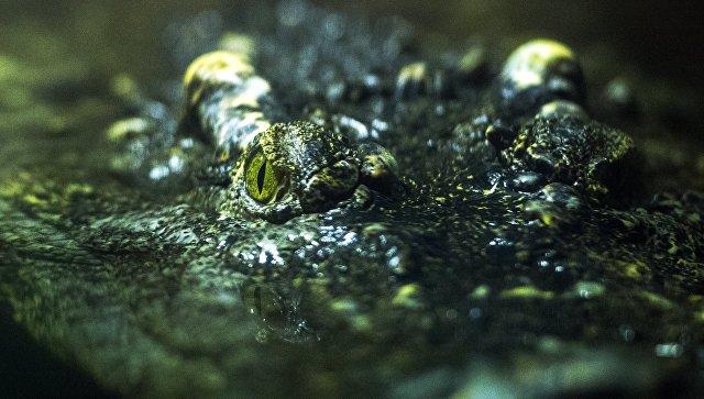 Крокодилы съели священника