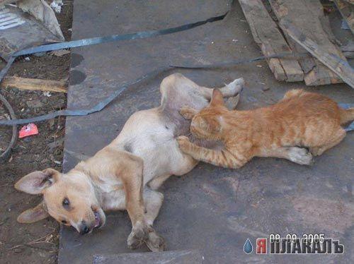 Кошки против Собак (подборка) .