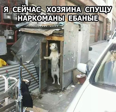 http://s00.yaplakal.com/pics/pics_original/2/9/8/11503892.jpg