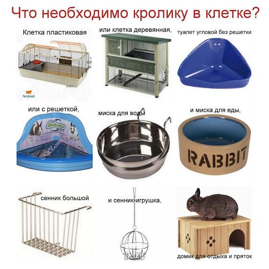 Чем кормят кроликов декоративных в домашних условиях