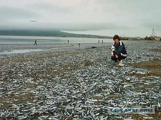 рыбалка в абрамовке приморского края
