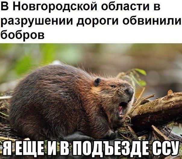 http://s00.yaplakal.com/pics/pics_original/3/0/5/13098503.jpg