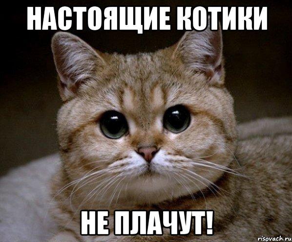При нападении кошки пострадала семья из четырёх человек в Москве