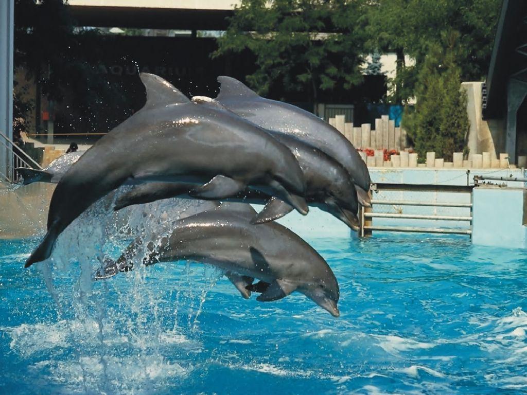 Любите ли вы дельфинов так, как люблю их я?