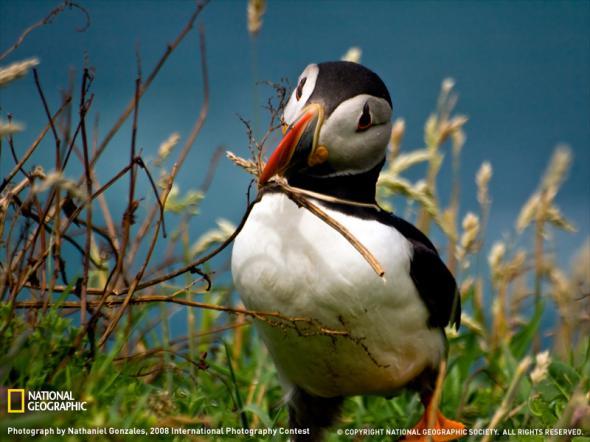 Лучшие фотографии от National Geographic 2009