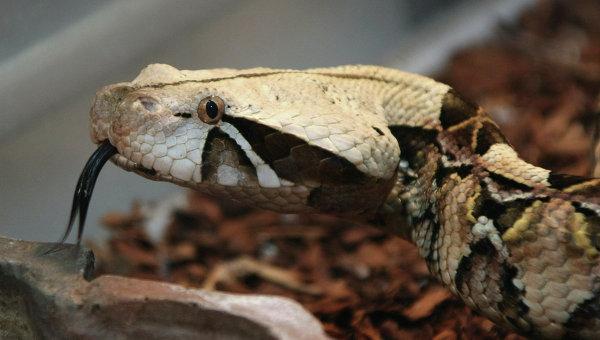 Полуторагодовалый ребенок загрыз ядовитую змею