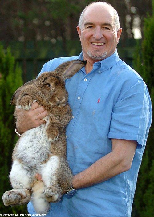Кролик Эмо (5 фото)