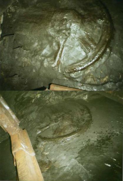 Оставленный 300 миллионов лет назад отпечаток колеса обнаружили в шахте Ростовской области