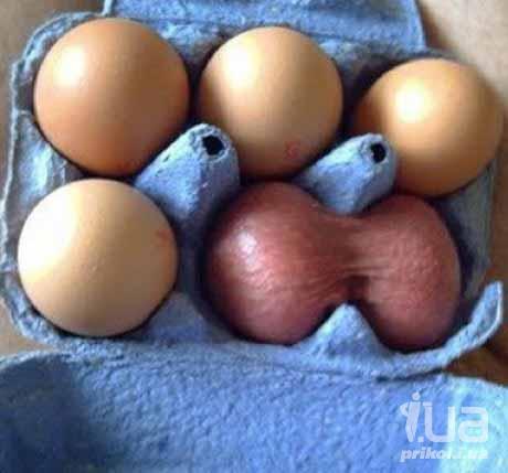 Мужские яйца в картинках 6 фотография