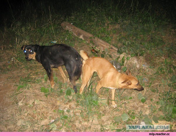 касается почему собаки прилипают друг к другу послабления постном календаре