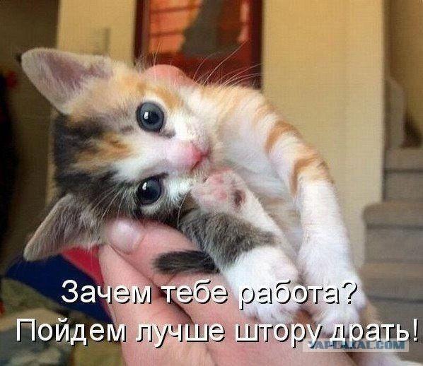 http://s00.yaplakal.com/pics/pics_original/3/2/8/3572823.jpg