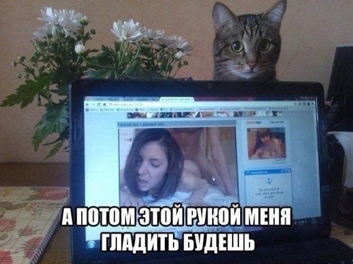 http://s00.yaplakal.com/pics/pics_original/3/3/0/11214033.jpg