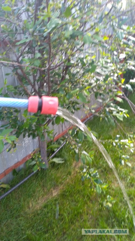 Своя вода в саду