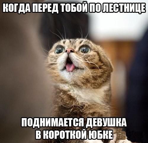 http://s00.yaplakal.com/pics/pics_original/3/4/0/8683043.jpg