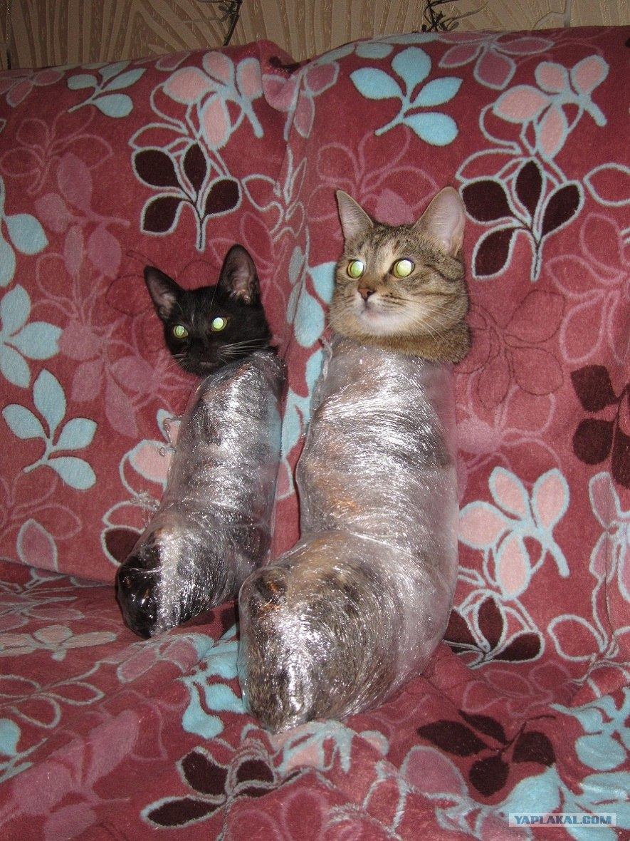Замотанные девушки плёнкой фото фото 451-969