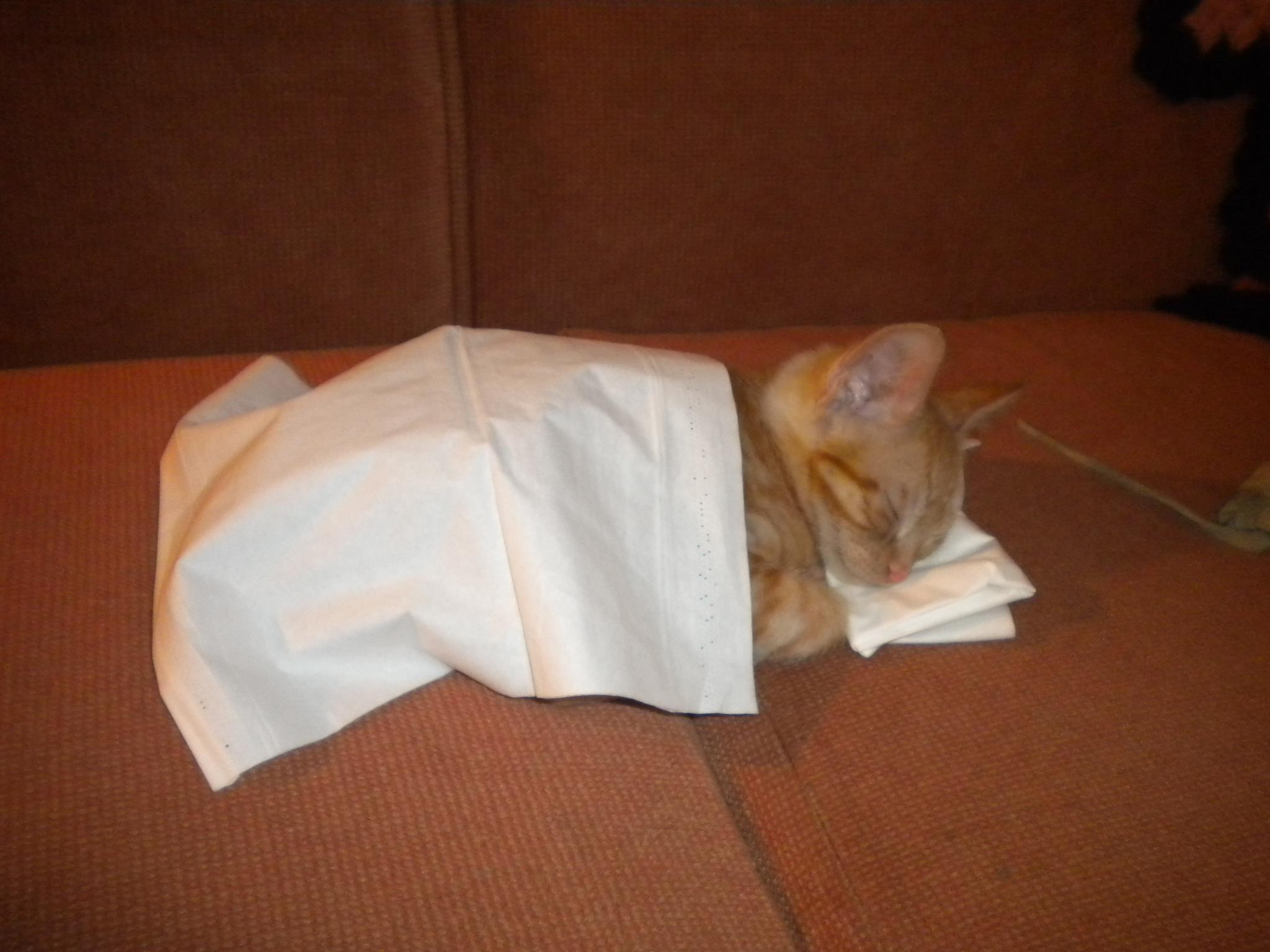 Фото спящей киски 9 фотография