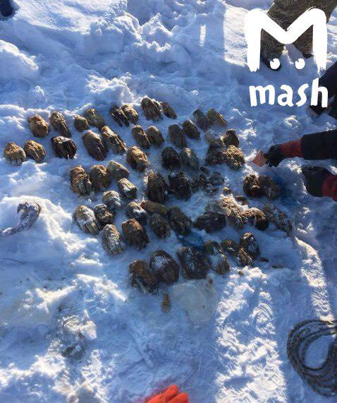 26 пар человеческих кистей нашли в реке Амур