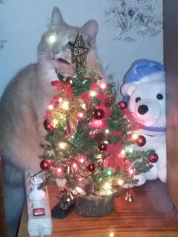 Рождественская мечта котов