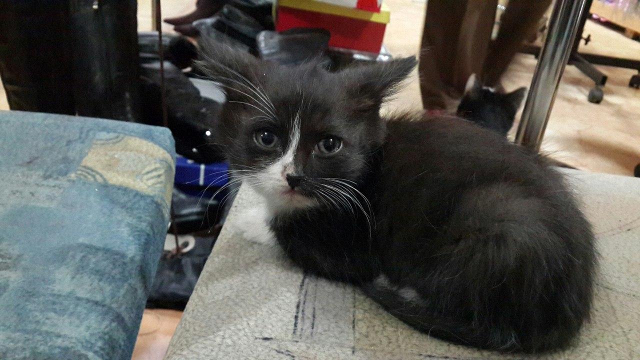 Картинки больной котик