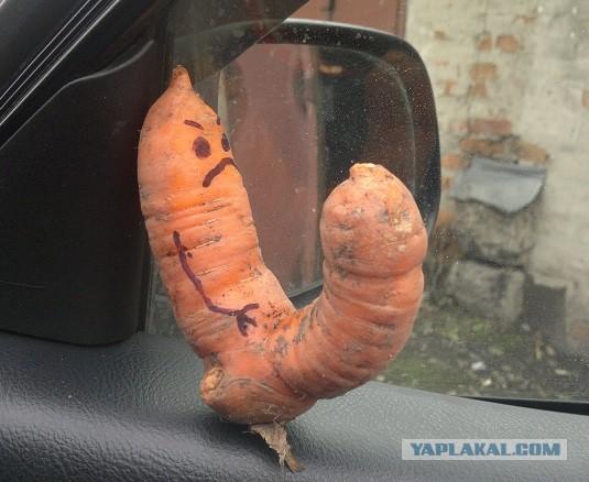 Морковки и бананы для одиноких дам - прошедший день