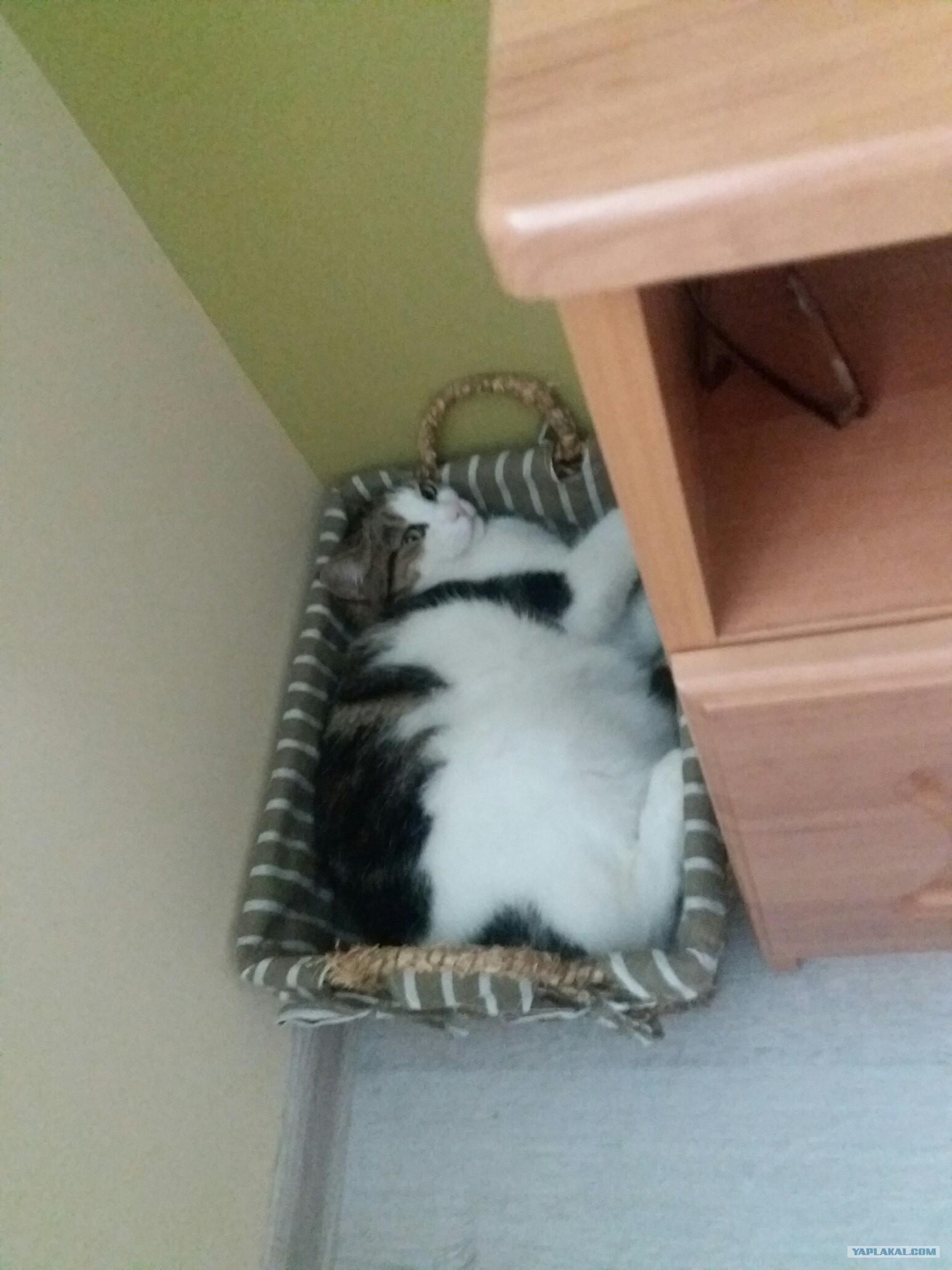 Домик для кошки у батареи