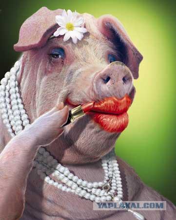 меня женщина свинья где ласкать содержит синонимы