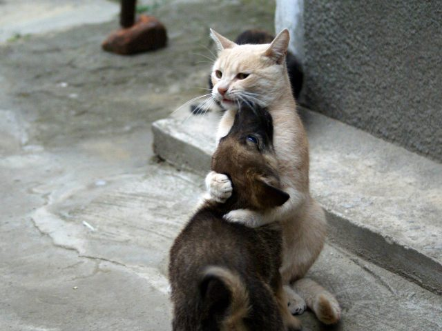 Госдума приняла в первом чтении законопроект об ужесточении наказания за жестокое обращение с животными