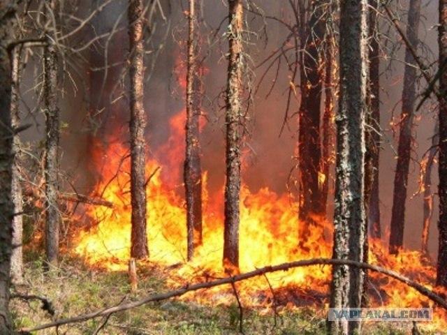Пожары в ЮГРЕ