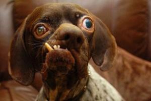 ...и форума. самая страшная собака 2011, по мне...
