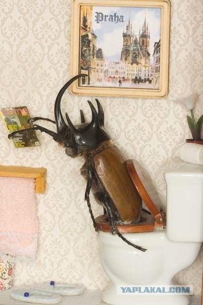 Самодельные жуки (47 фото).  Люди, живущие в Чернобыле (14 фото).