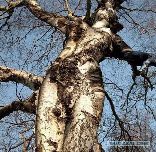С чем связано дерево в природе