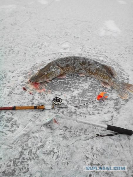 рыбалка на флажки