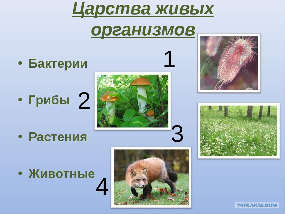 Растения окружающий мир эволюция классификация