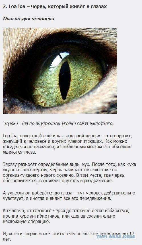 самые страшные паразиты человека