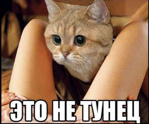 lisiy-muzhik-s-bolshim-chlenom