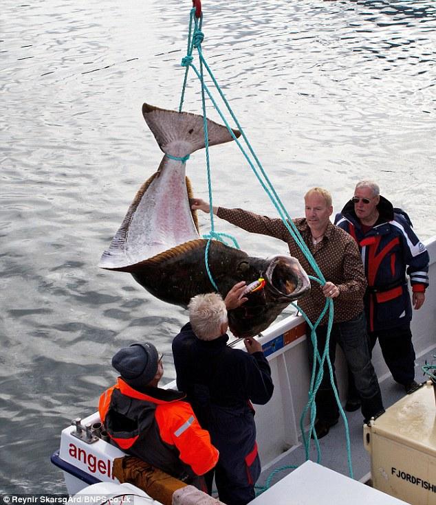 Гигантский улов - ЯПлакалъ