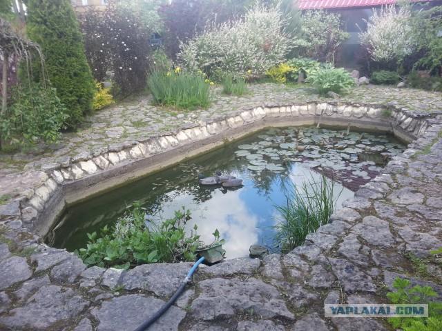 Реконструкция пруда у тёщи дома