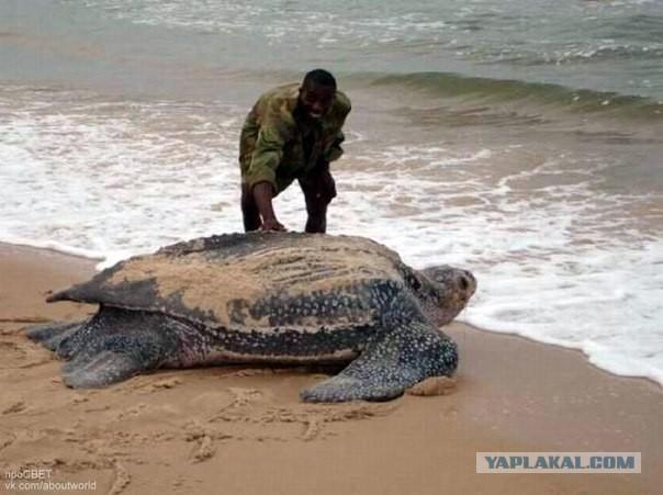 Это черепаха да пизда