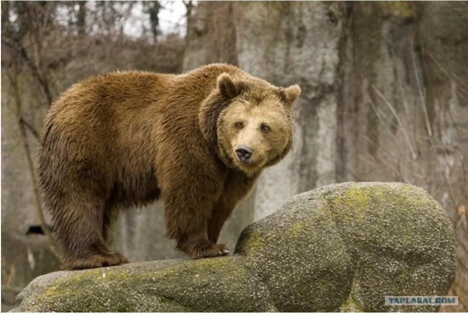 Картинки медведей  krasiviekartinkiru