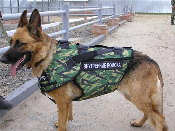 Животные на военной службе