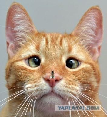 неизвестный котик