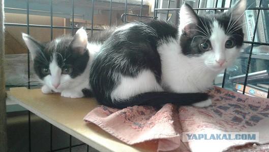 Трое из ларца. Маркизные котята ищут дом.  Москва