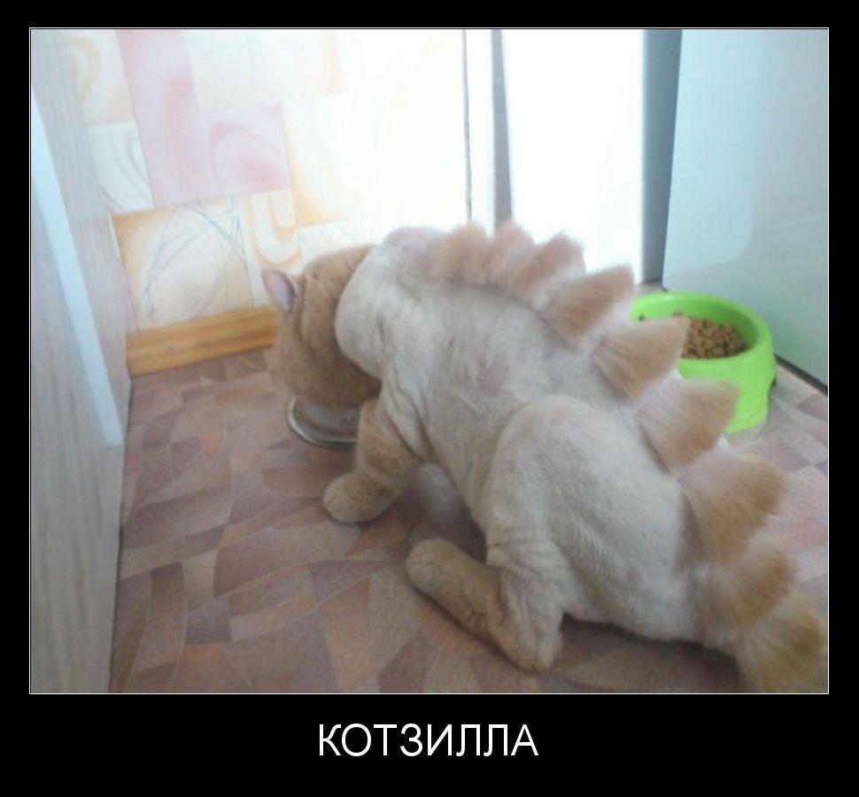 Стрижка кошек в уссурийске