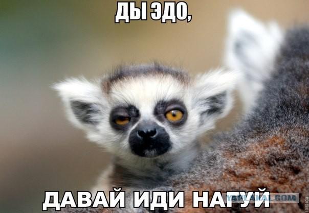 План войны в Сирии Путину предложили Иванов, Шойгу и Патрушев, - Bloomberg - Цензор.НЕТ 2230