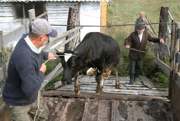 Бацька ввел безвиз и Россия приостанавливает импорт говядины из Минской области